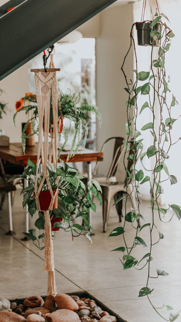 6-tips-for-healthy-house-plants
