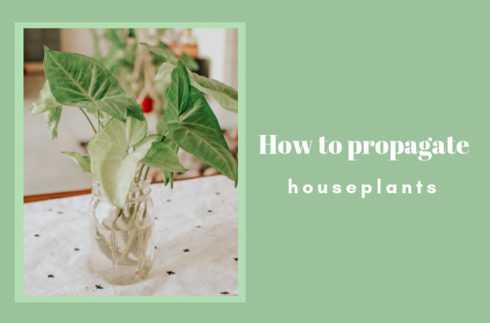how-to-propagate-houseplants-in water